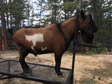 Ajax, Courtesy of Naked Bear Ranch