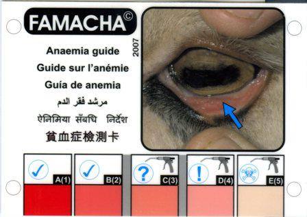 "FAMACHA (Or ""How to Assess for Anemia in Goats and Sheep"