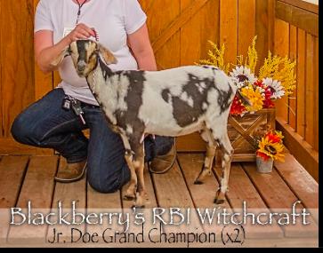 Wicca, Junior Grand Champion x2